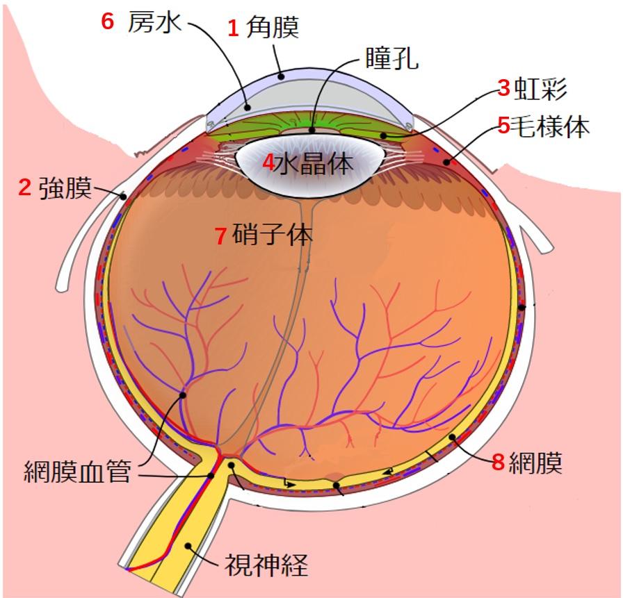 感覚器 眼球